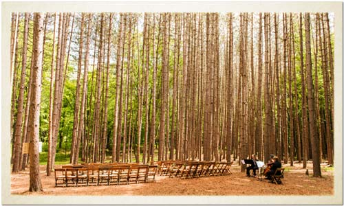 The Pine Grove: your ultimate forest wedding ceremony spot