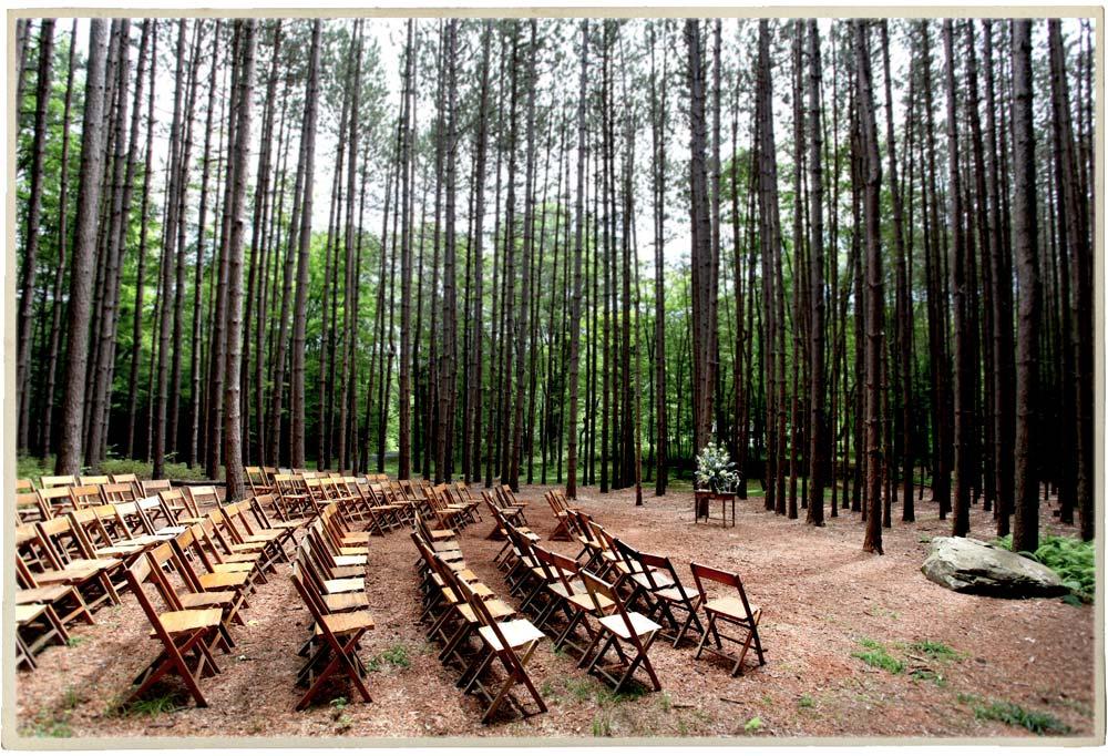 Ceremony in the Pine Grove