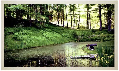 Catskills mountains, fields and ponds